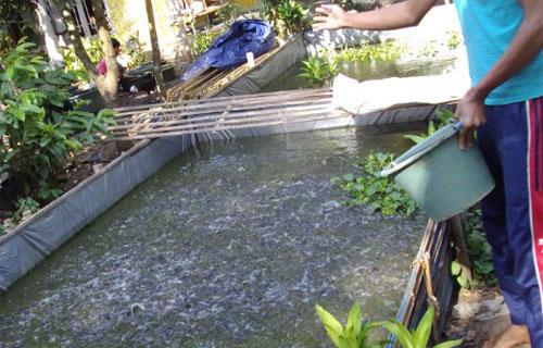 Bahan Yang Digunakan Untuk Pengisi Kolam Dalam Budidaya Lele